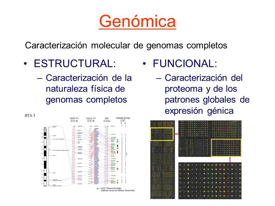 DNA eucariótico Genes funcionales de copia única DNA de secuencia repetida DNA separador Secuencias funcionales Secuencias sin función conocida Secuencias funcionales No codificantes Familias de genes codificantes (y pseudogenes asociados) Familias de genes dispersos Familias de genes en tándem Repeticiones heterocromatina Del centrómero VNTR Secuencias derivadas De transposiciones Transposones Retrotransposones Clasificación del DNA eucariota Genómica estructural Caracterización de la naturaleza física de genomas: - Polimorfismos del DNA - Cartografía