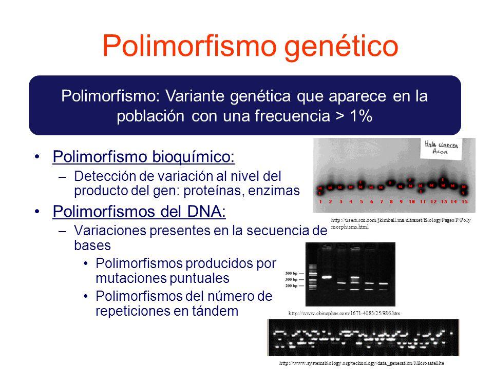 Polimorfismo genético Polimorfismo bioquímico: –Detección de variación al nivel del producto del gen: proteínas, enzimas Polimorfismos del DNA: –Variaciones presentes en la secuencia de bases Polimorfismos producidos por mutaciones puntuales Polimorfismos del número de repeticiones en tándem Polimorfismo: Variante genética que aparece en la población con una frecuencia > 1% http://users.rcn.com/jkimball.ma.ultranet/BiologyPages/P/Poly morphisms.html http://www.chinaphar.com/1671-4083/25/986.htm http://www.systemsbiology.org/technology/data_generation/Microsatellite