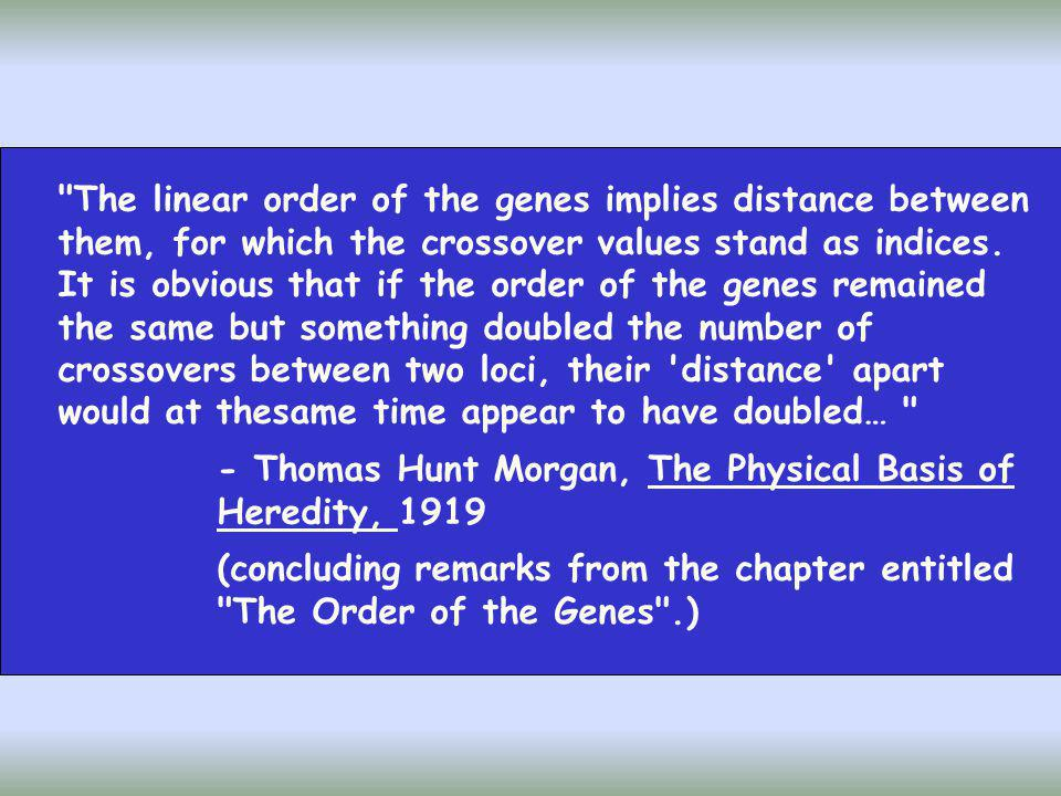 Cuanto mayor es la distancia entre genes ligados, mayor es la probabilidad de que ocurra un entrecruzamiento entre cromátidas no hermanas en la zona de separación de estos genes y por tanto mayor será el número de descendientes recombinantes % de recombinación medida de la distancia genética INDIVIDUO AaBb - Si A y B son independientes aB Ab - Si A y B están ligados (en acoplamiento) aB Ab A principios de siglo...