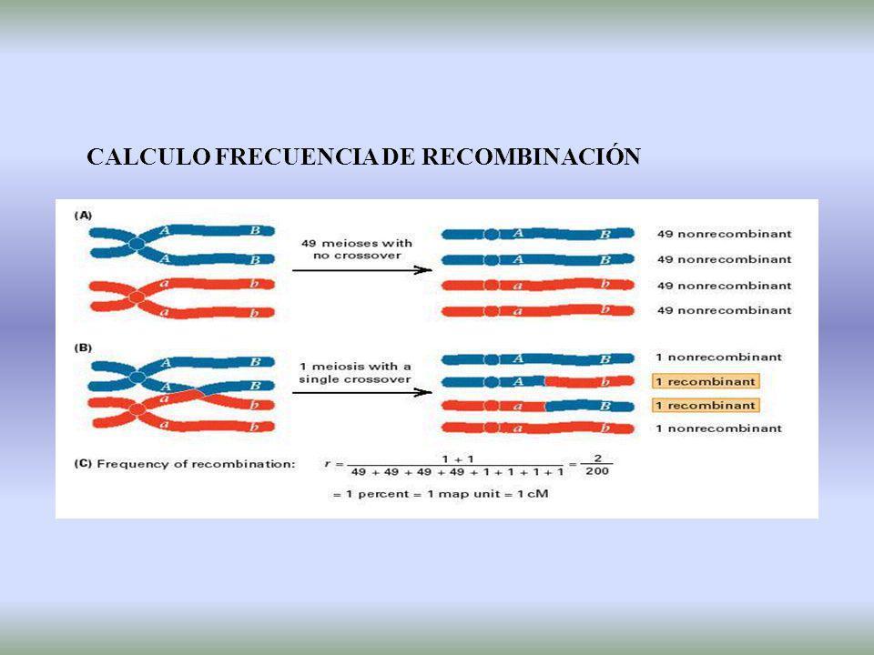 CRUZAMIENTO DE TRES PUNTOS - Estudiar el ligamiento entre tres loci 1.- Orden 2.- Distancia genética (frec.