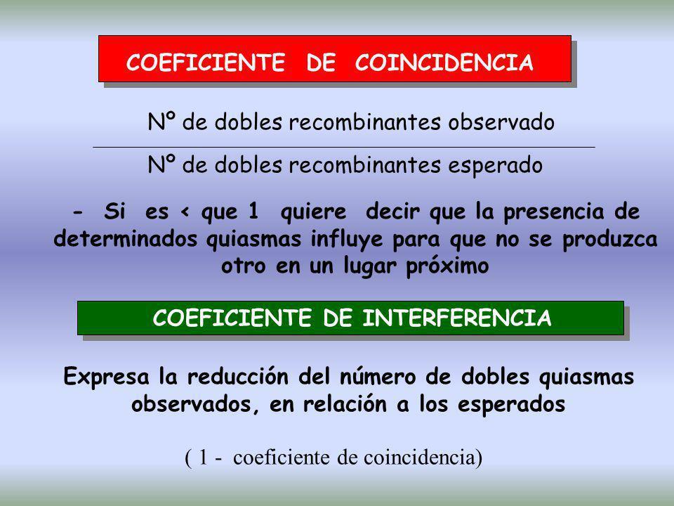 COEFICIENTE DE COINCIDENCIA Nº de dobles recombinantes observado Nº de dobles recombinantes esperado - Si es < que 1 quiere decir que la presencia de