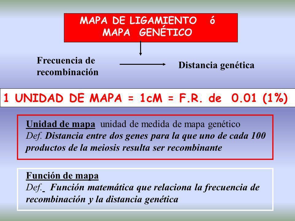 MAPA DE LIGAMIENTO ó MAPA GENÉTICO Frecuencia de recombinación Distancia genética 1 UNIDAD DE MAPA = 1cM = F.R. de 0.01 (1%) Unidad de mapa unidad de