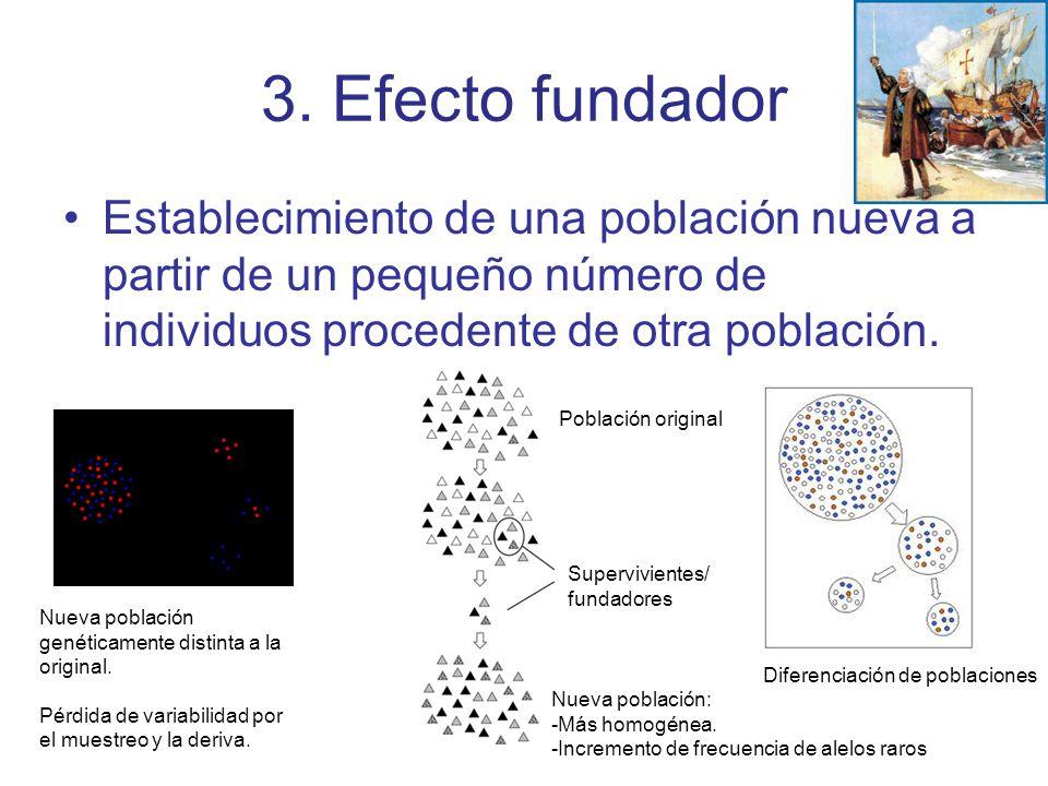 3. Efecto fundador Establecimiento de una población nueva a partir de un pequeño número de individuos procedente de otra población. Nueva población ge