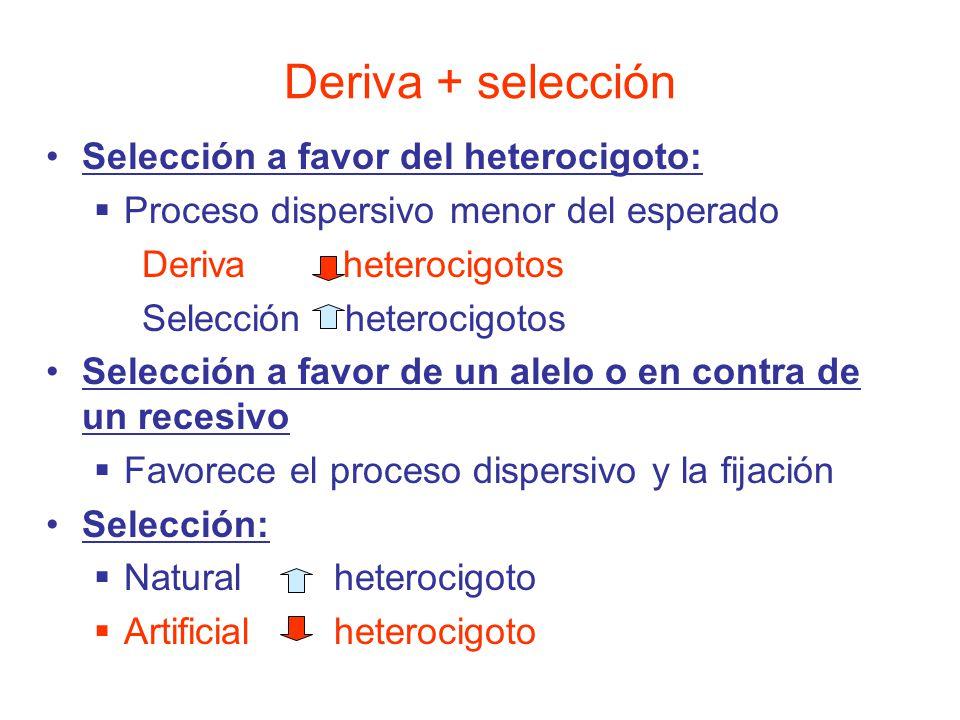 Selección a favor del heterocigoto: Proceso dispersivo menor del esperado Deriva heterocigotos Selección heterocigotos Selección a favor de un alelo o en contra de un recesivo Favorece el proceso dispersivo y la fijación Selección: Natural heterocigoto Artificialheterocigoto Deriva + selección