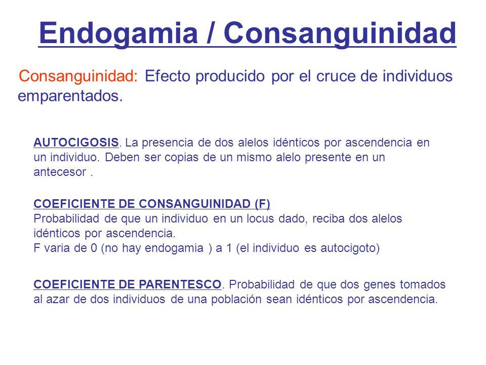 Endogamia / Consanguinidad Consanguinidad: Efecto producido por el cruce de individuos emparentados.