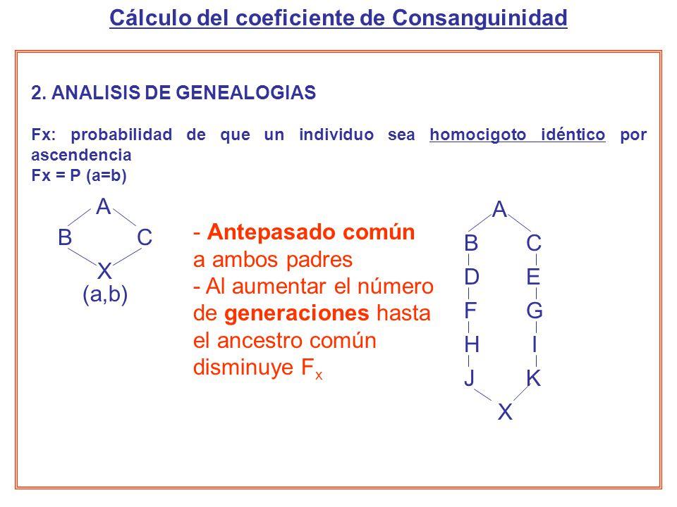 2. ANALISIS DE GENEALOGIAS Fx: probabilidad de que un individuo sea homocigoto idéntico por ascendencia Fx = P (a=b) A X BC CB X A ED GF IH KJ (a,b) -