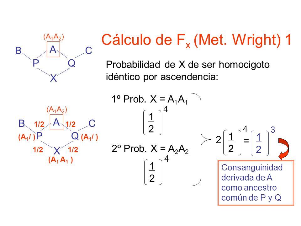 Cálculo de F x (Met.