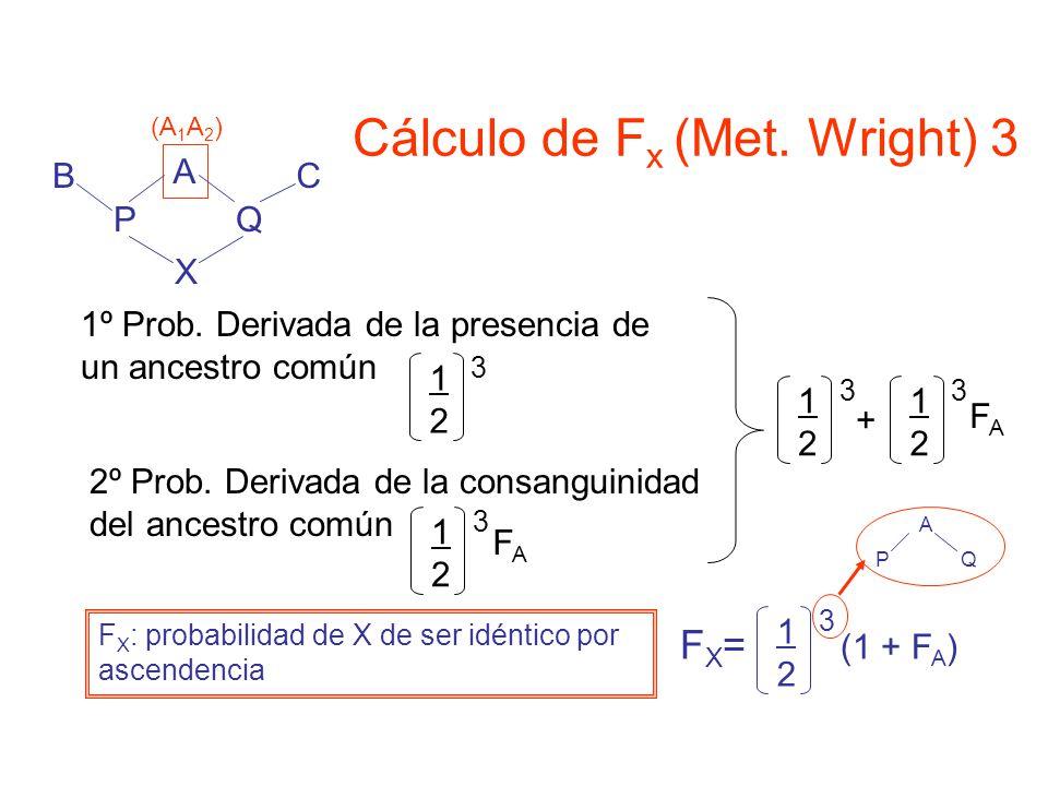 A X PQ CB (A 1 A 2 ) 1º Prob.Derivada de la presencia de un ancestro común 1212 3 2º Prob.