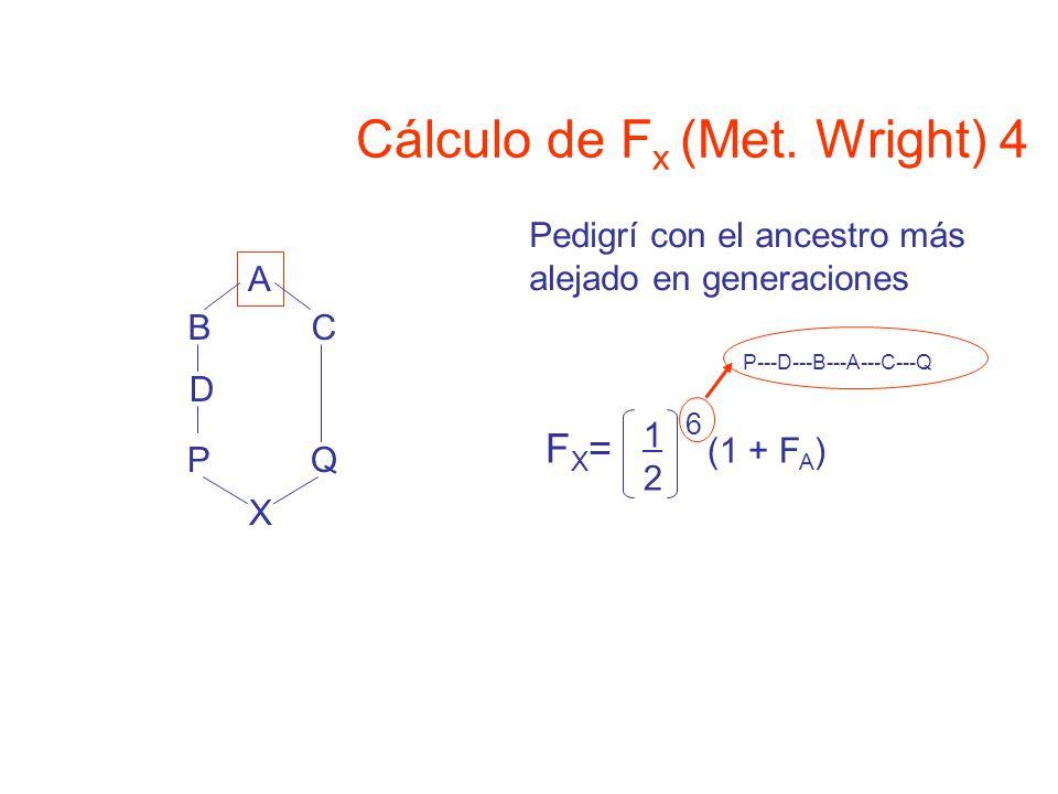 A BC D 1212 6 (1 + F A ) FX=FX= P---D---B---A---C---Q X PQ Pedigrí con el ancestro más alejado en generaciones Cálculo de F x (Met.