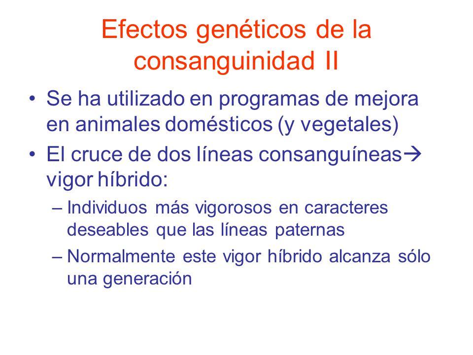 Efectos genéticos de la consanguinidad II Se ha utilizado en programas de mejora en animales domésticos (y vegetales) El cruce de dos líneas consanguíneas vigor híbrido: –Individuos más vigorosos en caracteres deseables que las líneas paternas –Normalmente este vigor híbrido alcanza sólo una generación