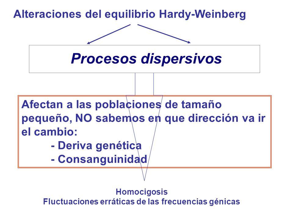 Afectan a las poblaciones de tamaño pequeño, NO sabemos en que dirección va ir el cambio: - Deriva genética - Consanguinidad Procesos sistemáticos Procesos dispersivos Alteraciones del equilibrio Hardy-Weinberg Homocigosis Fluctuaciones erráticas de las frecuencias génicas Procesos dispersivos