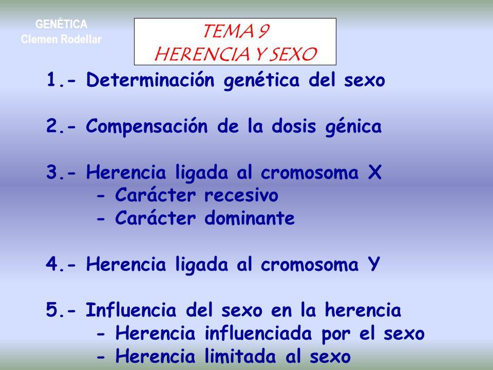 1.- Determinación genética del sexo 2.- Compensación de la dosis génica 3.- Herencia ligada al cromosoma X - Carácter recesivo - Carácter dominante 4.- Herencia ligada al cromosoma Y 5.- Influencia del sexo en la herencia - Herencia influenciada por el sexo - Herencia limitada al sexo TEMA 9 HERENCIA Y SEXO GENÉTICA Clemen Rodellar