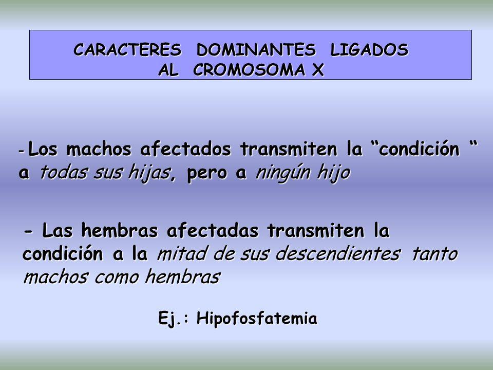CARACTERES DOMINANTES LIGADOS AL CROMOSOMA X - Los machos afectados transmiten la condición a todas sus hijas, pero a ningún hijo - Las hembras afectadas transmiten la condición a la mitad de sus descendientes tanto machos como hembras Ej.: Hipofosfatemia