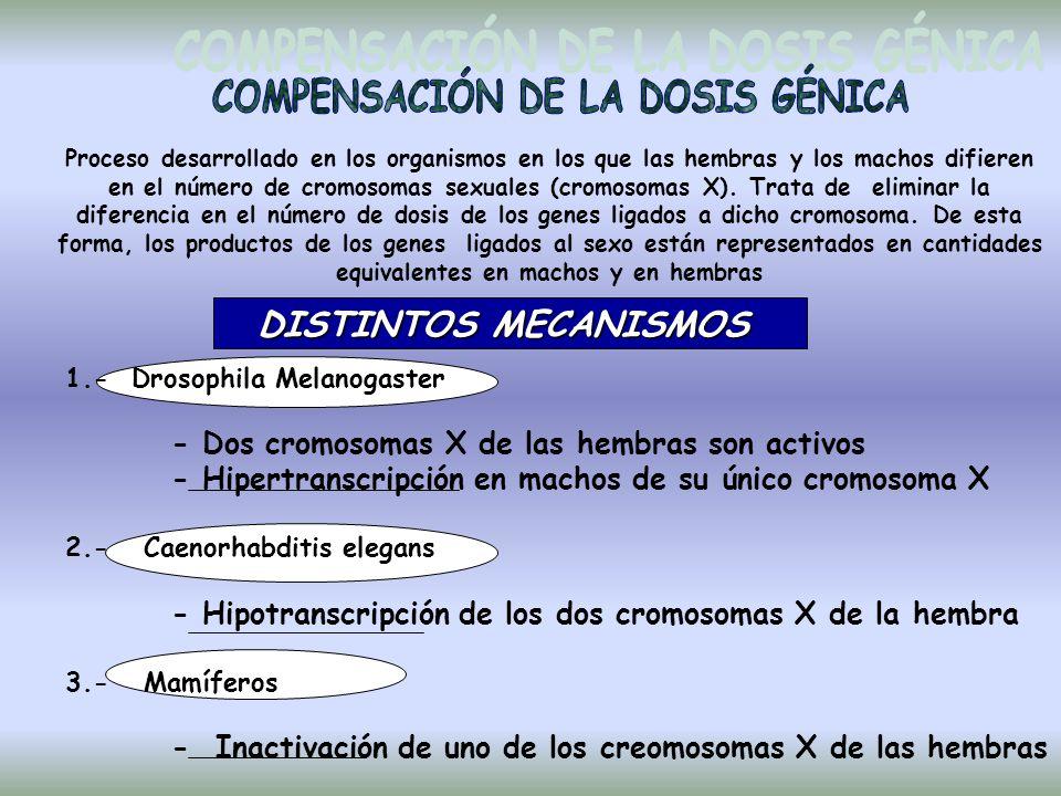Proceso desarrollado en los organismos en los que las hembras y los machos difieren en el número de cromosomas sexuales (cromosomas X).