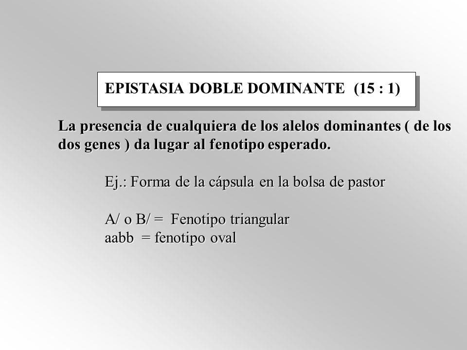 EPISTASIA DOBLE DOMINANTE (15 : 1) La presencia de cualquiera de los alelos dominantes ( de los dos genes ) da lugar al fenotipo esperado. Ej.: Forma