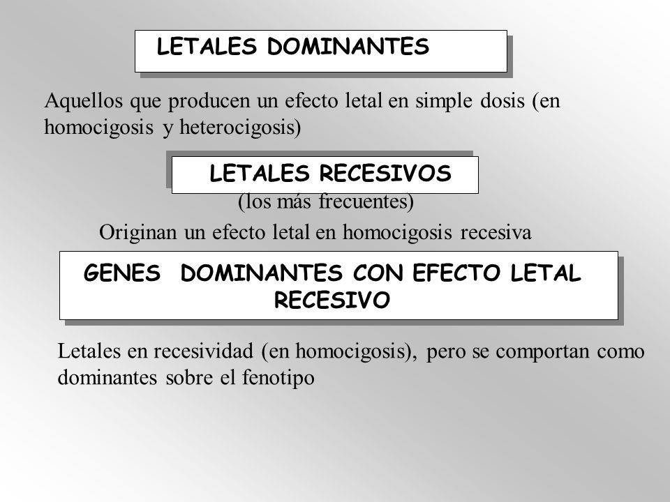 LETALES DOMINANTES Aquellos que producen un efecto letal en simple dosis (en homocigosis y heterocigosis) LETALES RECESIVOS (los más frecuentes) Origi
