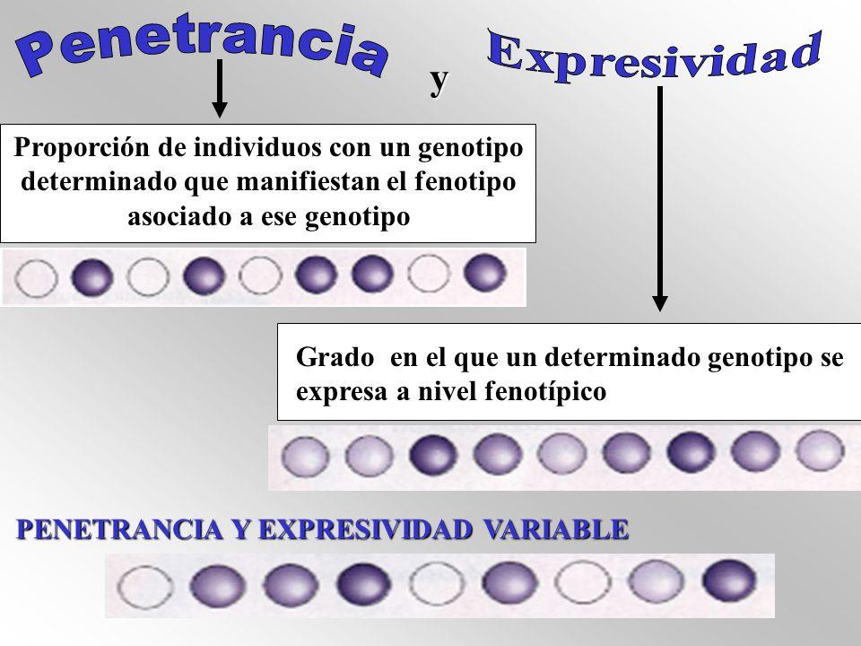 y Proporción de individuos con un genotipo determinado que manifiestan el fenotipo asociado a ese genotipo Grado en el que un determinado genotipo se