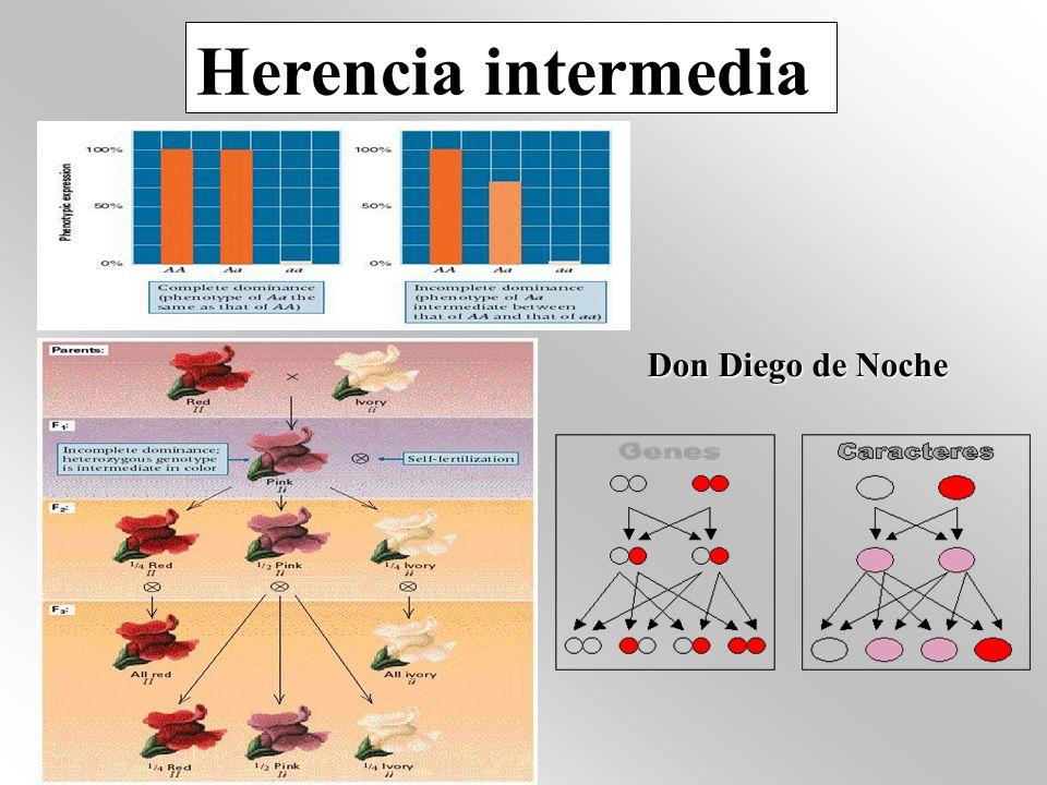 LETALES DOMINANTES Aquellos que producen un efecto letal en simple dosis (en homocigosis y heterocigosis) LETALES RECESIVOS (los más frecuentes) Originan un efecto letal en homocigosis recesiva GENES DOMINANTES CON EFECTO LETAL RECESIVO Letales en recesividad (en homocigosis), pero se comportan como dominantes sobre el fenotipo