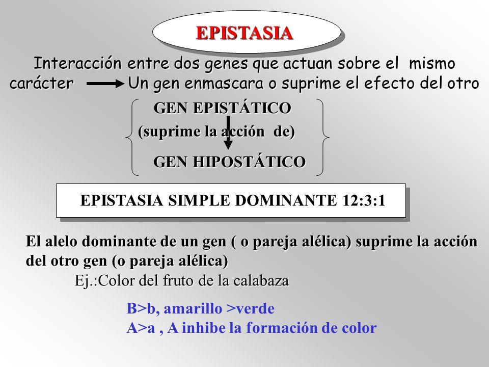 EPISTASIA SIMPLE RECESIVA (9 :3 :4) Raza Labrador El alelo recesivo de una pareja alélica suprime la acción de la otra pareja alélica B>b (Negro >marrón) E>e ( ee inhibe la deposición del color en el pelo)