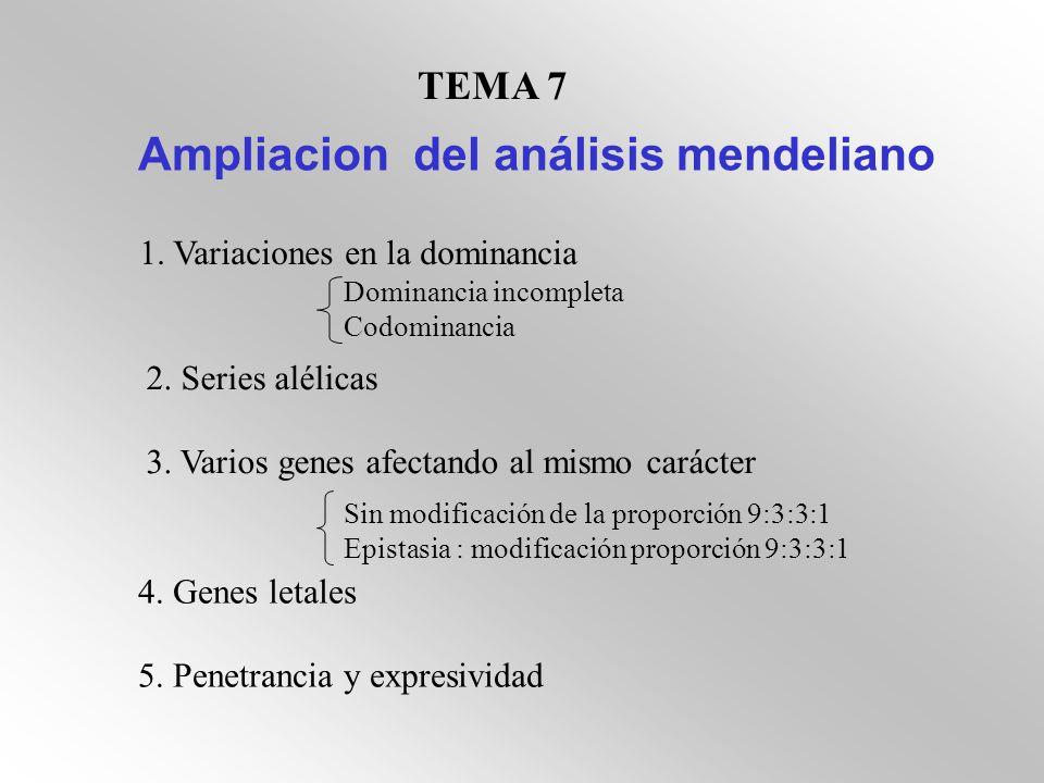 TEMA 7 Ampliacion del análisis mendeliano 1. Variaciones en la dominancia Dominancia incompleta Codominancia 2. Series alélicas 3. Varios genes afecta