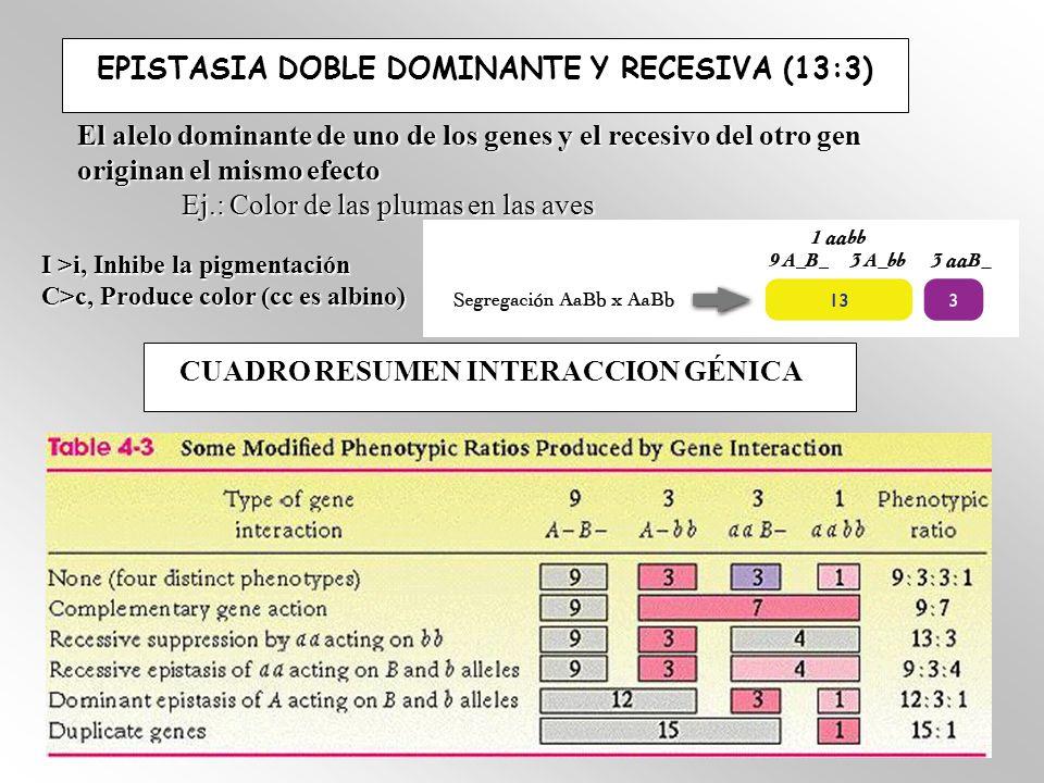 EPISTASIA DOBLE DOMINANTE Y RECESIVA (13:3) El alelo dominante de uno de los genes y el recesivo del otro gen originan el mismo efecto Ej.: Color de las plumas en las aves I >i, Inhibe la pigmentación C>c, Produce color (cc es albino) CUADRO RESUMEN INTERACCION GÉNICA CUADRO RESUMEN INTERACCION GÉNICA