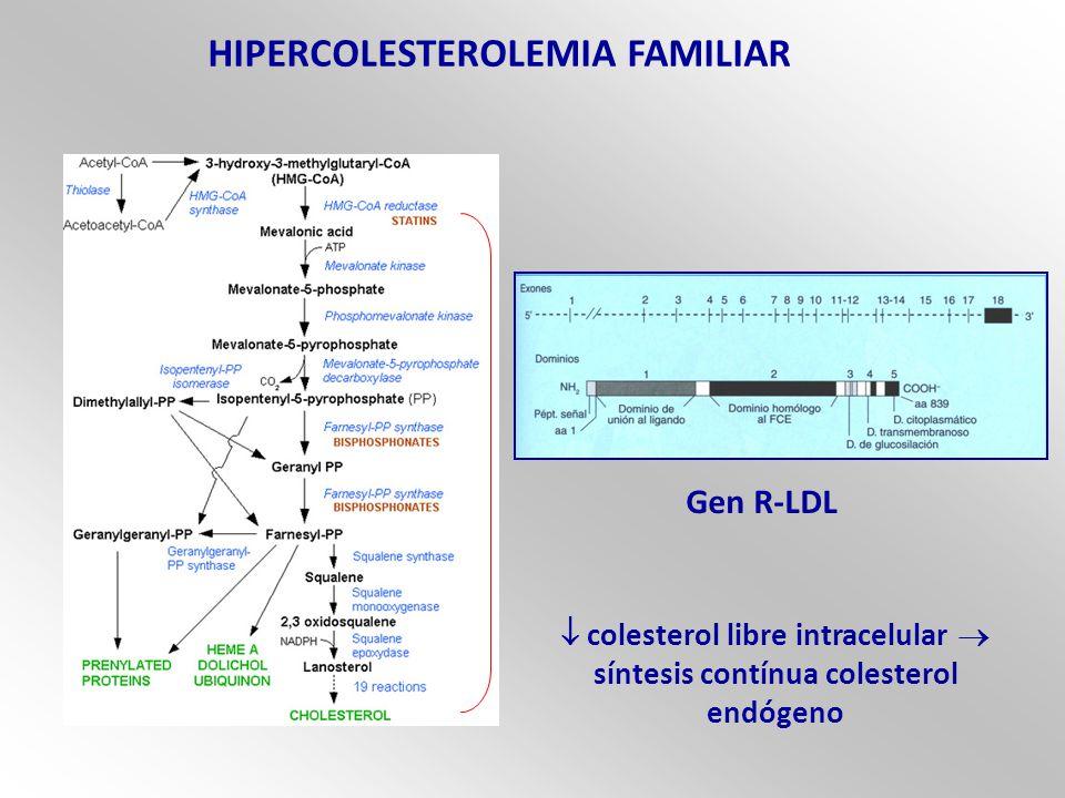 HIPERCOLESTEROLEMIA FAMILIAR Gen R-LDL colesterol libre intracelular síntesis contínua colesterol endógeno