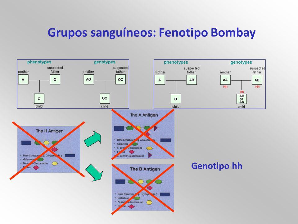 Grupos sanguíneos: Fenotipo Bombay Genotipo hh