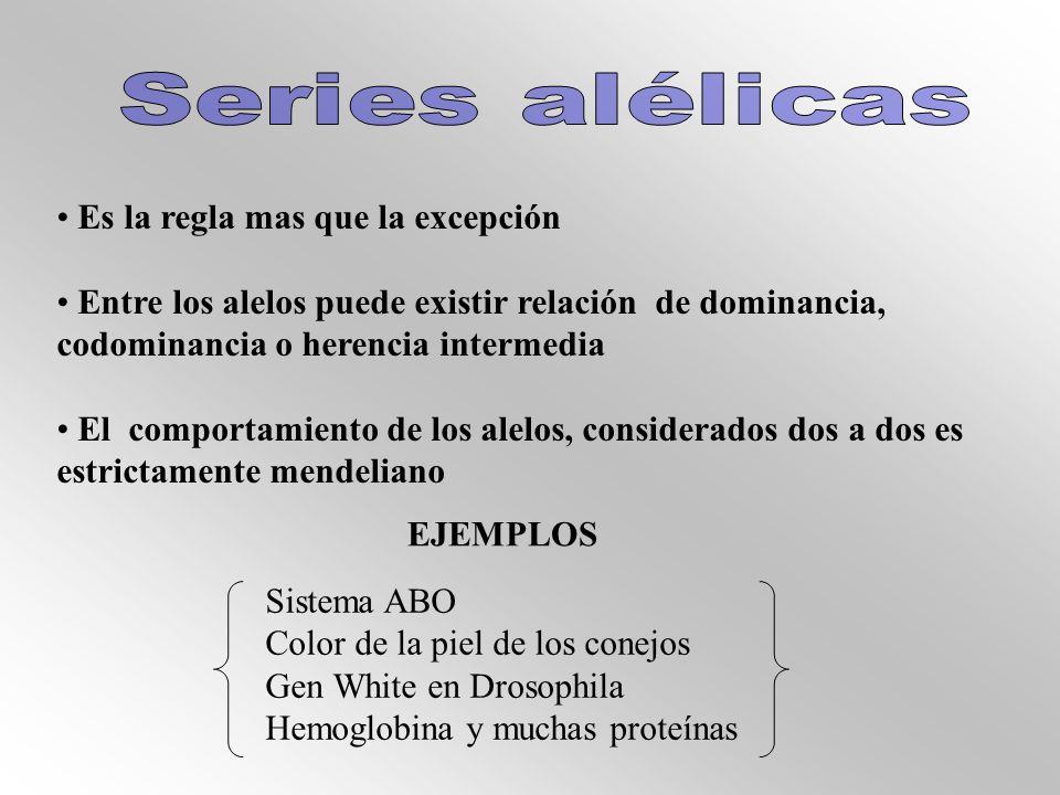 Es la regla mas que la excepción Entre los alelos puede existir relación de dominancia, codominancia o herencia intermedia El comportamiento de los alelos, considerados dos a dos es estrictamente mendeliano EJEMPLOS Sistema ABO Color de la piel de los conejos Gen White en Drosophila Hemoglobina y muchas proteínas