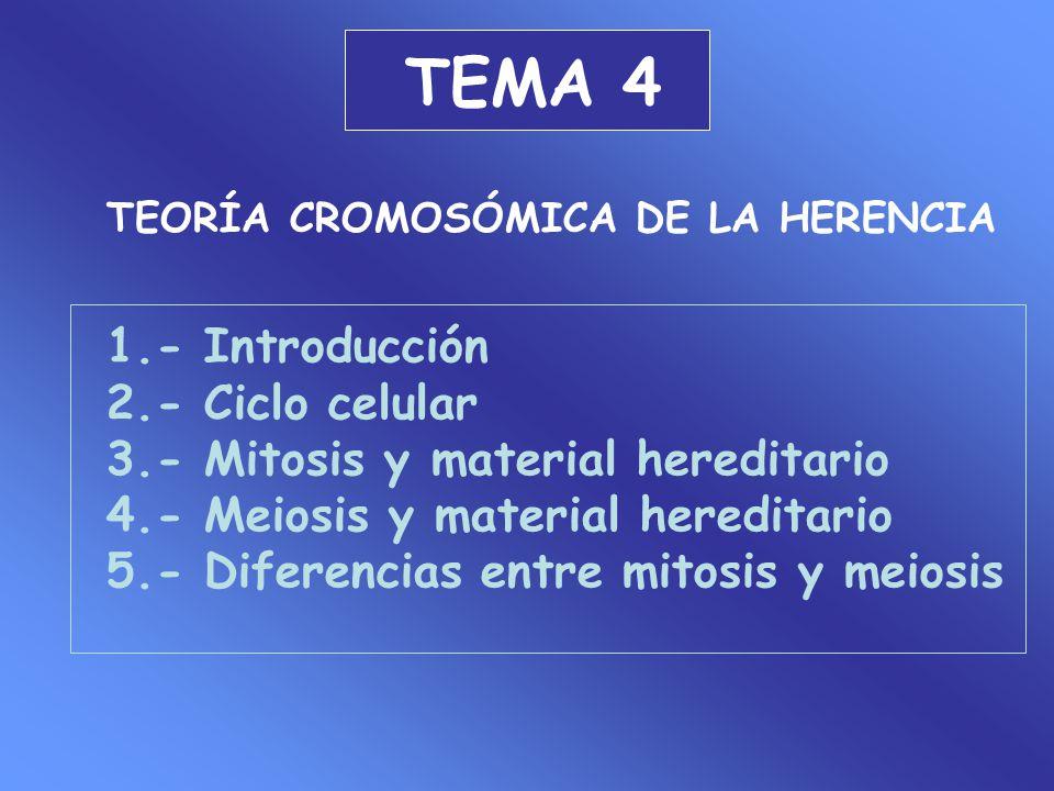 TEMA 4 TEORÍA CROMOSÓMICA DE LA HERENCIA 1.- Introducción 2.- Ciclo celular 3.- Mitosis y material hereditario 4.- Meiosis y material hereditario 5.-