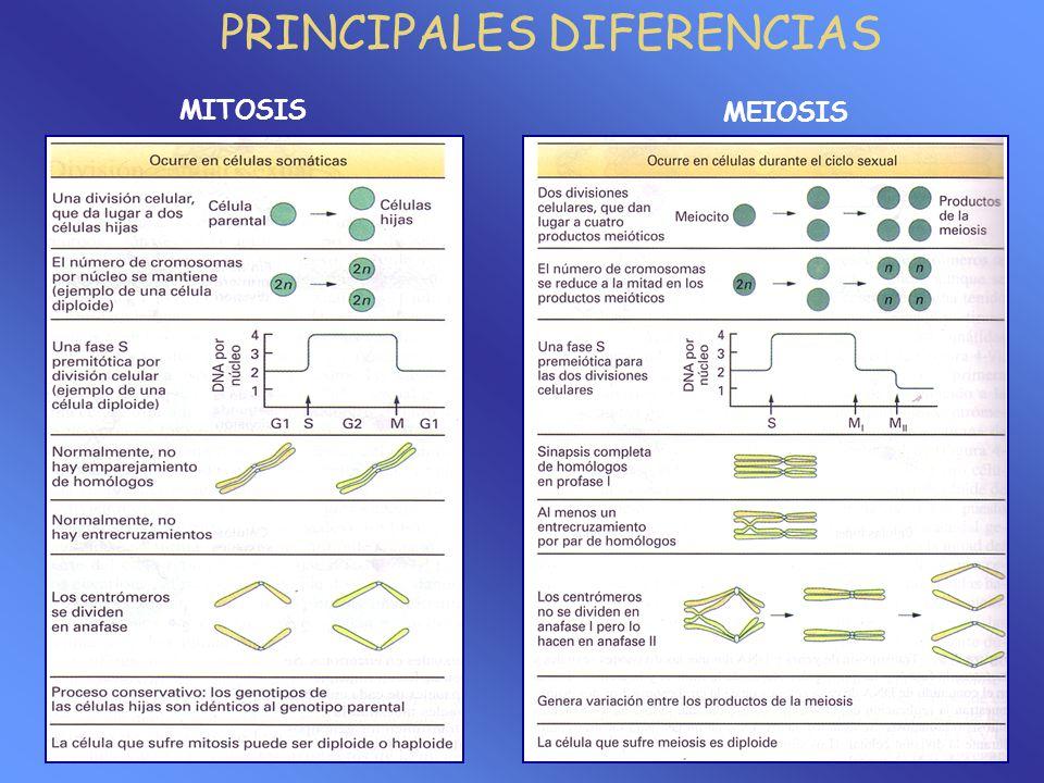 PRINCIPALES DIFERENCIAS MITOSIS MEIOSIS