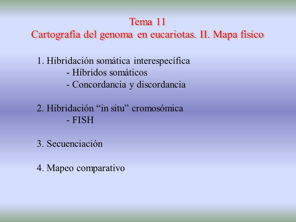 homocariontes hamster(2n=44) homocariontes humano(2n=92) 2n = 46 2n = 22 HIBRIDACIÓN CELULAR SOMÁTICA INTERESPECÍFICA
