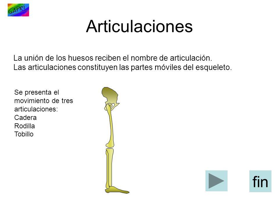 La unión de los huesos reciben el nombre de articulación.