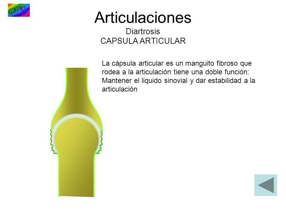 Articulaciones Diartrosis CAPSULA ARTICULAR La cápsula articular es un manguito fibroso que rodea a la articulación tiene una doble función: Mantener