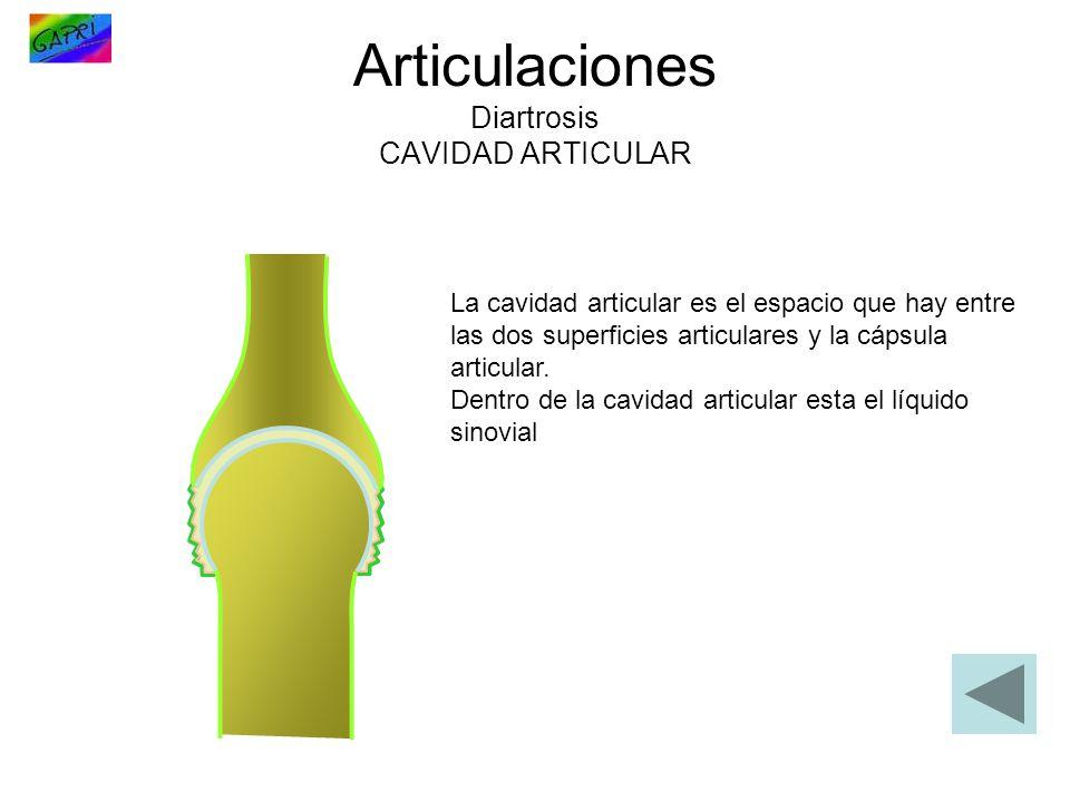 Articulaciones Diartrosis CAVIDAD ARTICULAR La cavidad articular es el espacio que hay entre las dos superficies articulares y la cápsula articular. D