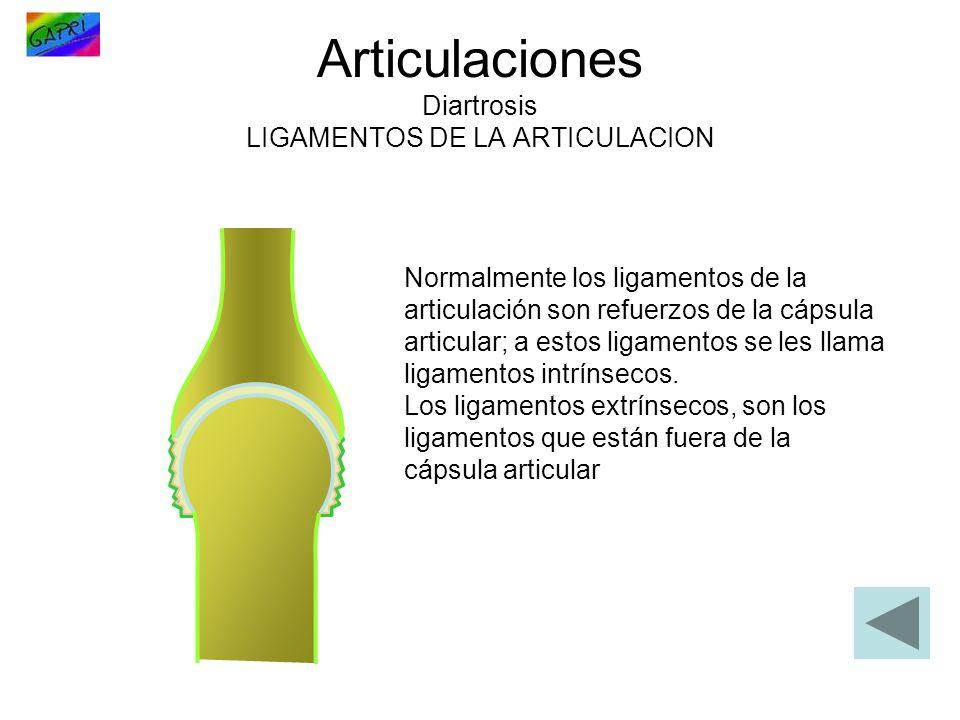 Articulaciones Diartrosis LIGAMENTOS DE LA ARTICULACION Normalmente los ligamentos de la articulación son refuerzos de la cápsula articular; a estos l