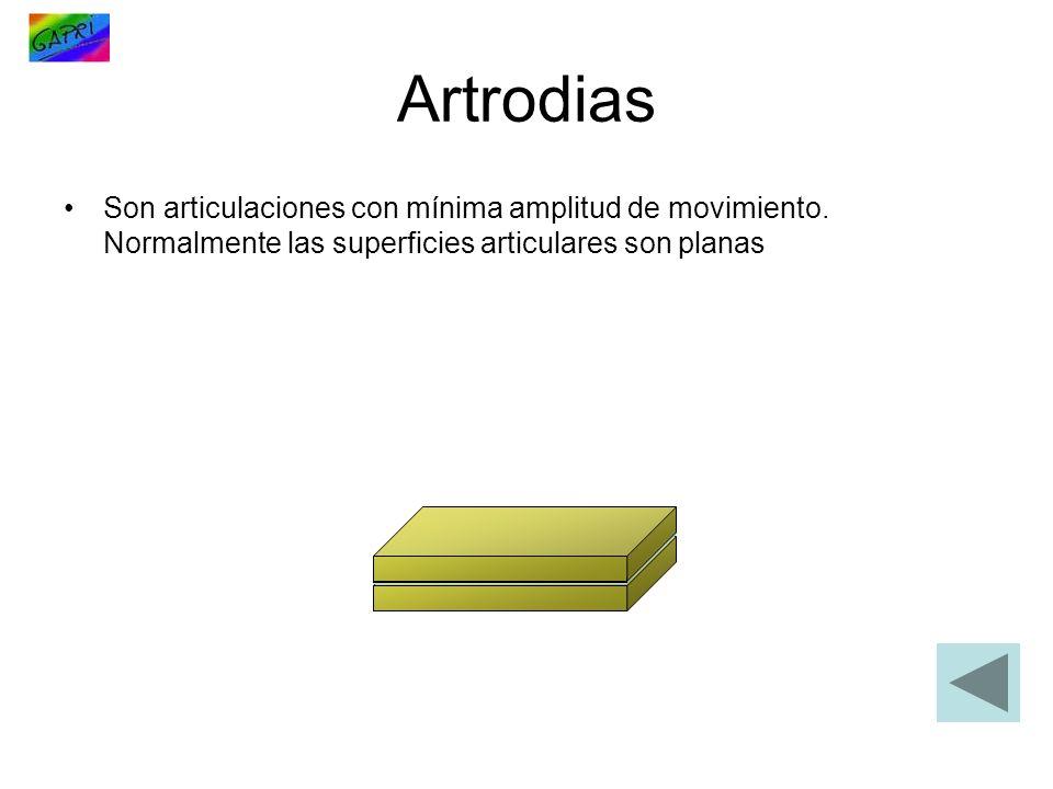 Artrodias Son articulaciones con mínima amplitud de movimiento. Normalmente las superficies articulares son planas