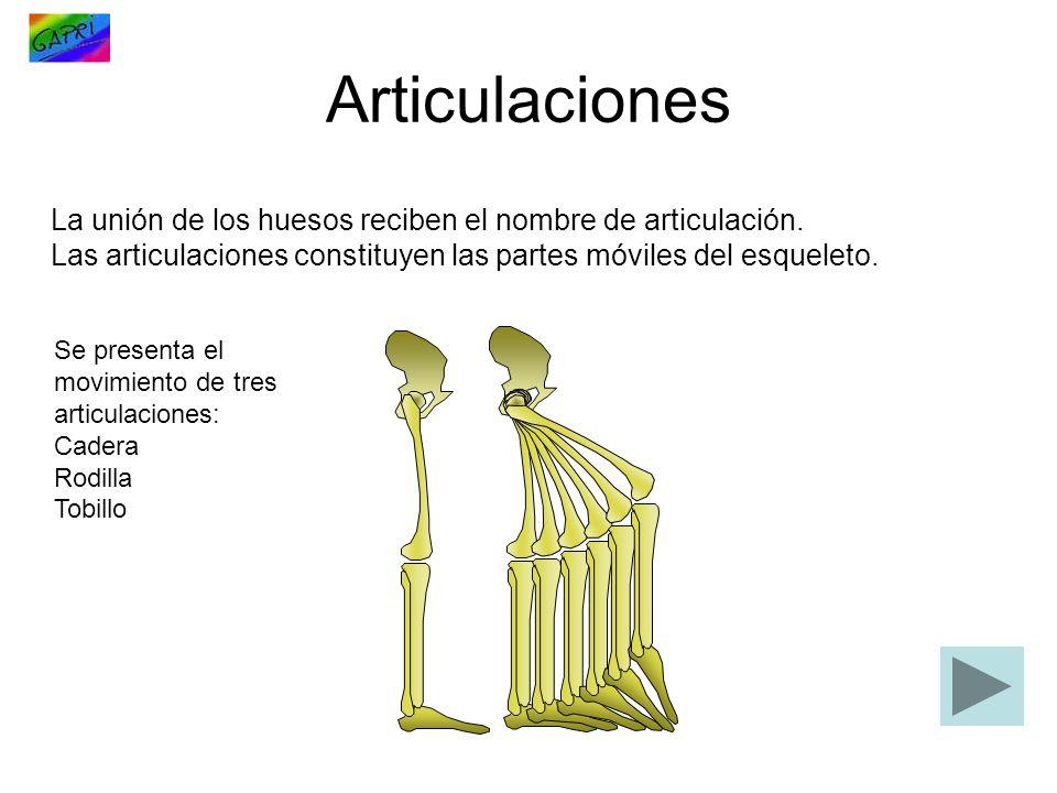 La unión de los huesos reciben el nombre de articulación. Las articulaciones constituyen las partes móviles del esqueleto. Articulaciones Se presenta
