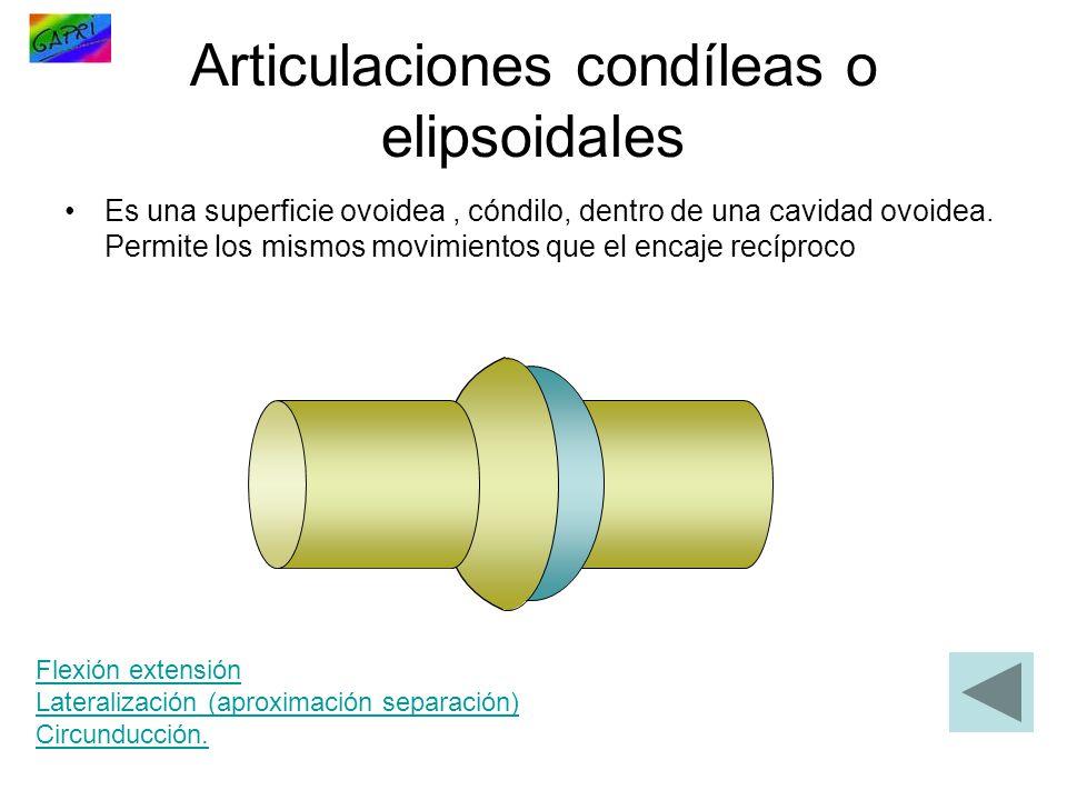 Articulaciones condíleas o elipsoidales Es una superficie ovoidea, cóndilo, dentro de una cavidad ovoidea. Permite los mismos movimientos que el encaj
