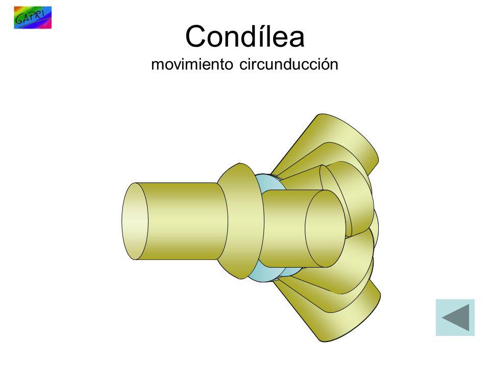 Condílea movimiento circunducción