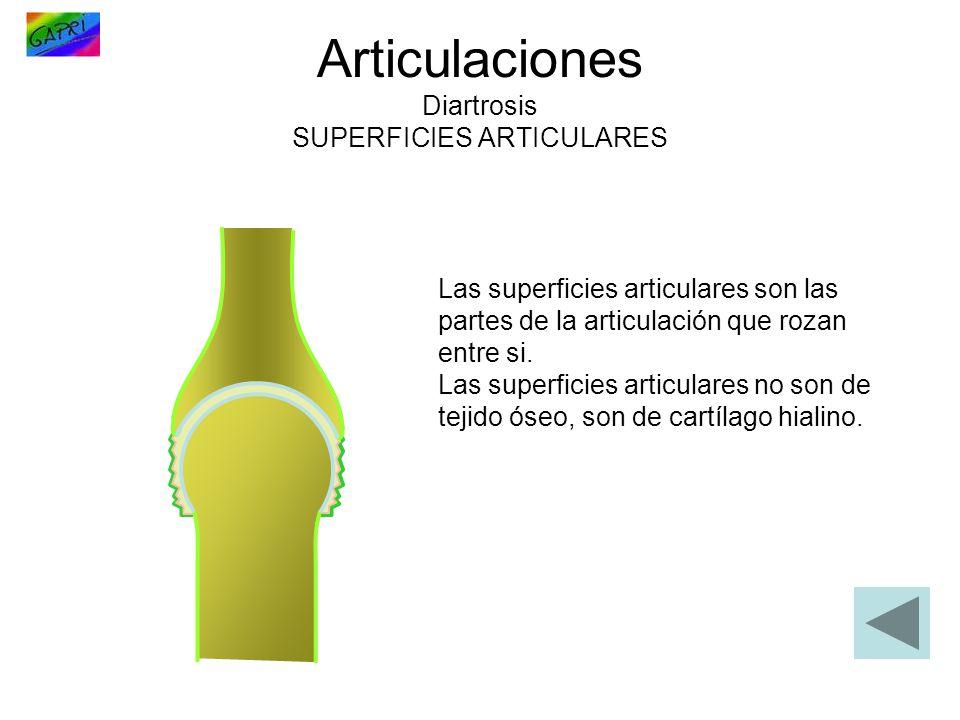 Articulaciones Diartrosis SUPERFICIES ARTICULARES Las superficies articulares son las partes de la articulación que rozan entre si. Las superficies ar