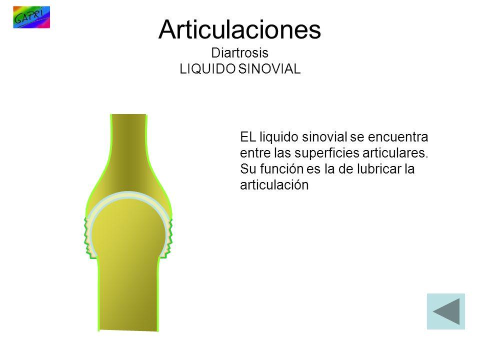Articulaciones Diartrosis LIQUIDO SINOVIAL EL liquido sinovial se encuentra entre las superficies articulares. Su función es la de lubricar la articul