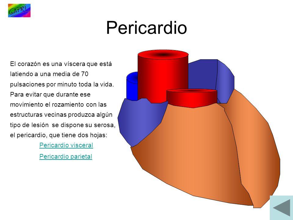 El corazón es una víscera que está latiendo a una media de 70 pulsaciones por minuto toda la vida. Para evitar que durante ese movimiento el rozamient
