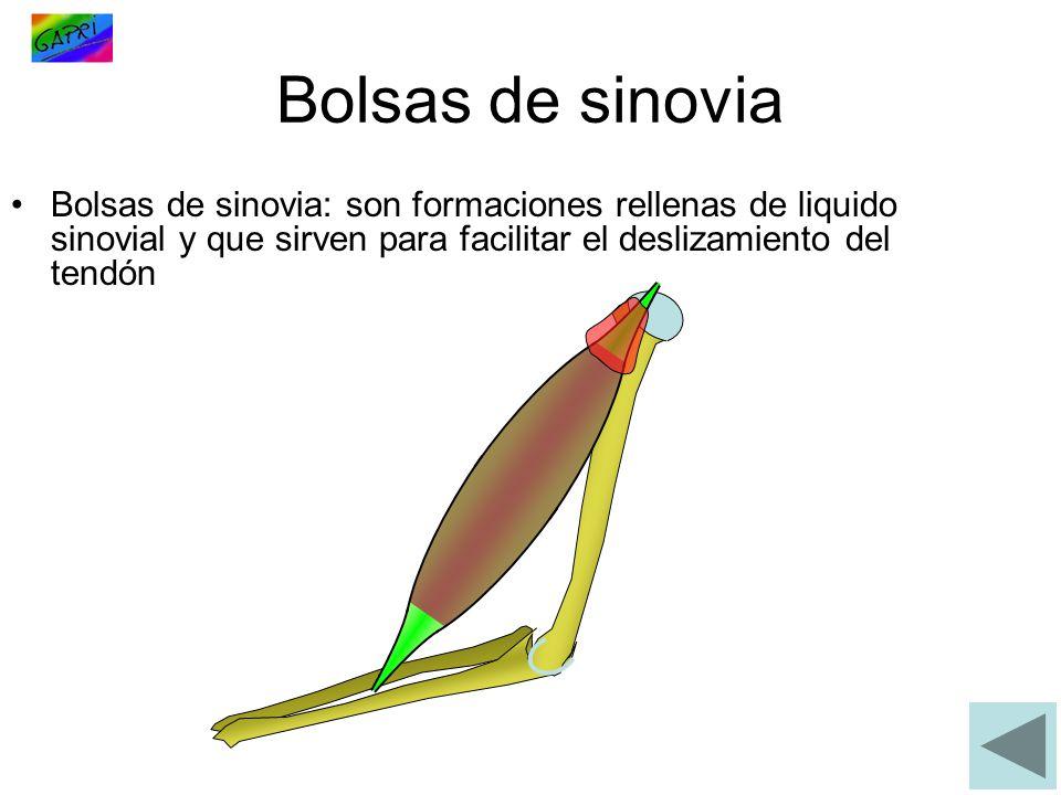 Bolsas de sinovia Bolsas de sinovia: son formaciones rellenas de liquido sinovial y que sirven para facilitar el deslizamiento del tendón