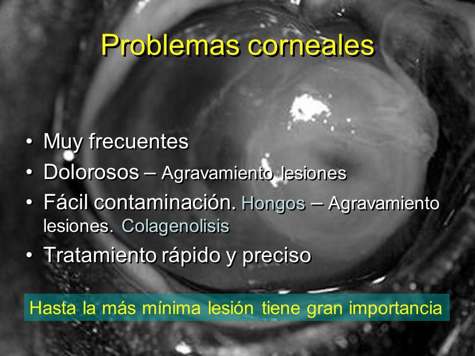 Problemas corneales Muy frecuentes Dolorosos – Agravamiento lesiones Fácil contaminación.