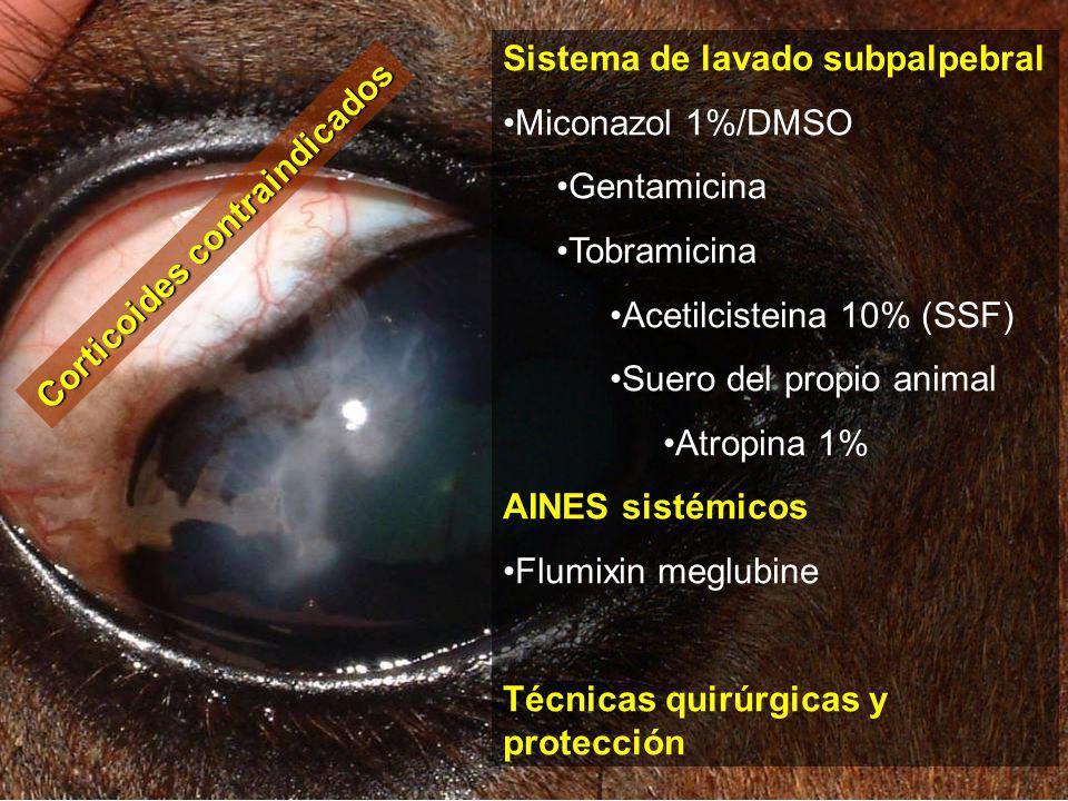 Miconazol 1%/DMSO Gentamicina Tobramicina Acetilcisteina 10% (SSF) Suero del propio animal Atropina 1% AINES sistémicos Flumixin meglubine Técnicas quirúrgicas y protección Corticoides contraindicados