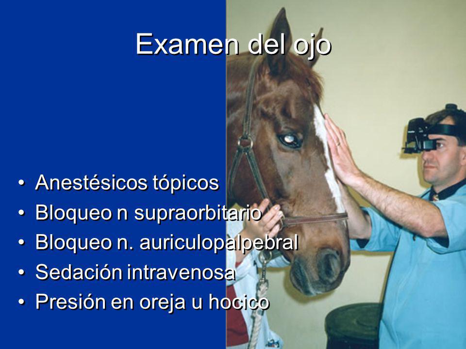 Examen del ojo Anestésicos tópicos Bloqueo n supraorbitario Bloqueo n.