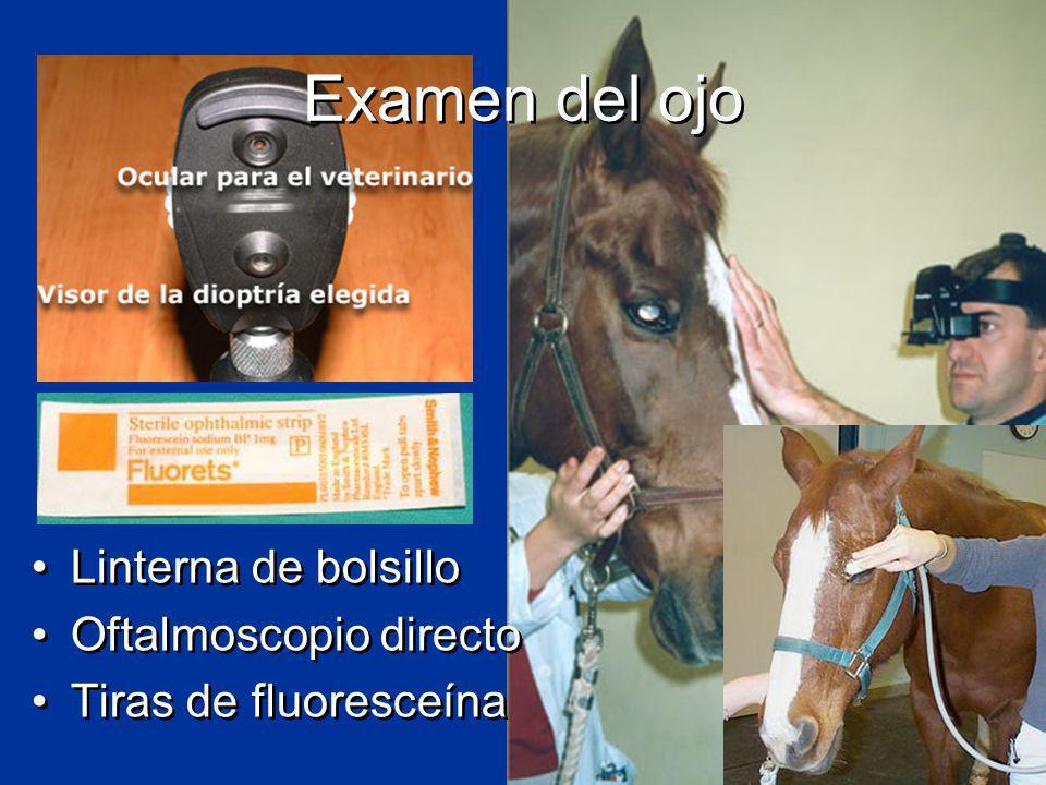 Examen del ojo Linterna de bolsillo Oftalmoscopio directo Tiras de fluoresceína Linterna de bolsillo Oftalmoscopio directo Tiras de fluoresceína