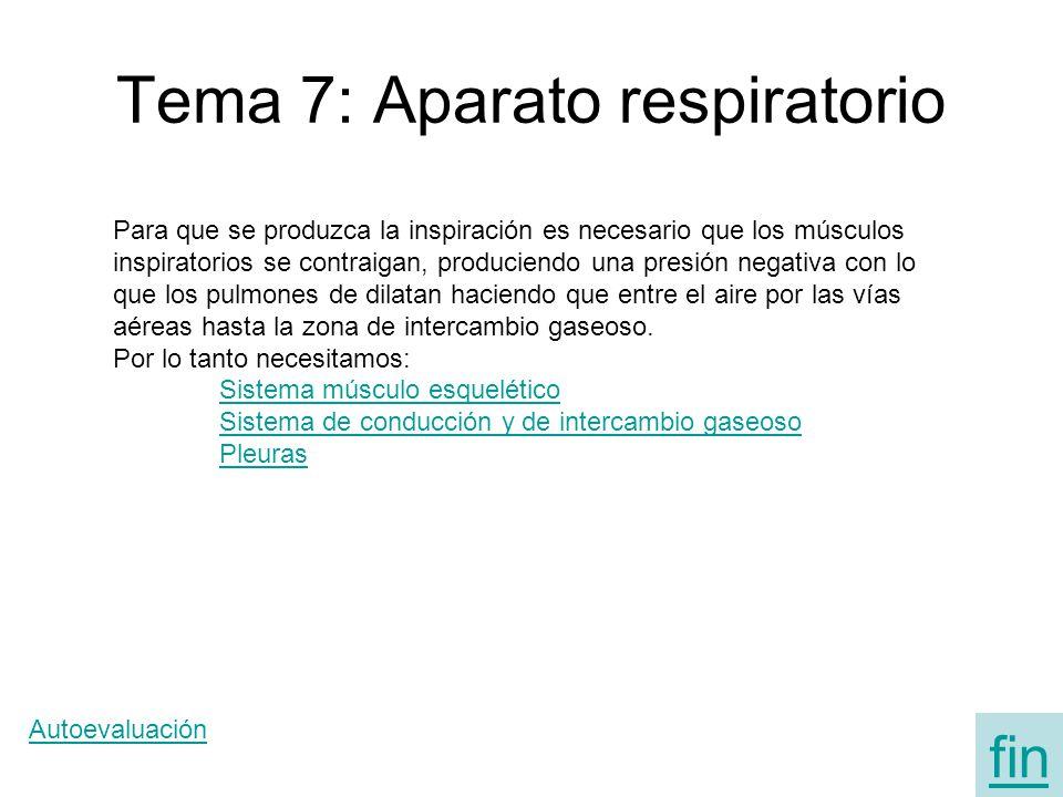 Tema 7: Aparato respiratorio Para que se produzca la inspiración es necesario que los músculos inspiratorios se contraigan, produciendo una presión ne