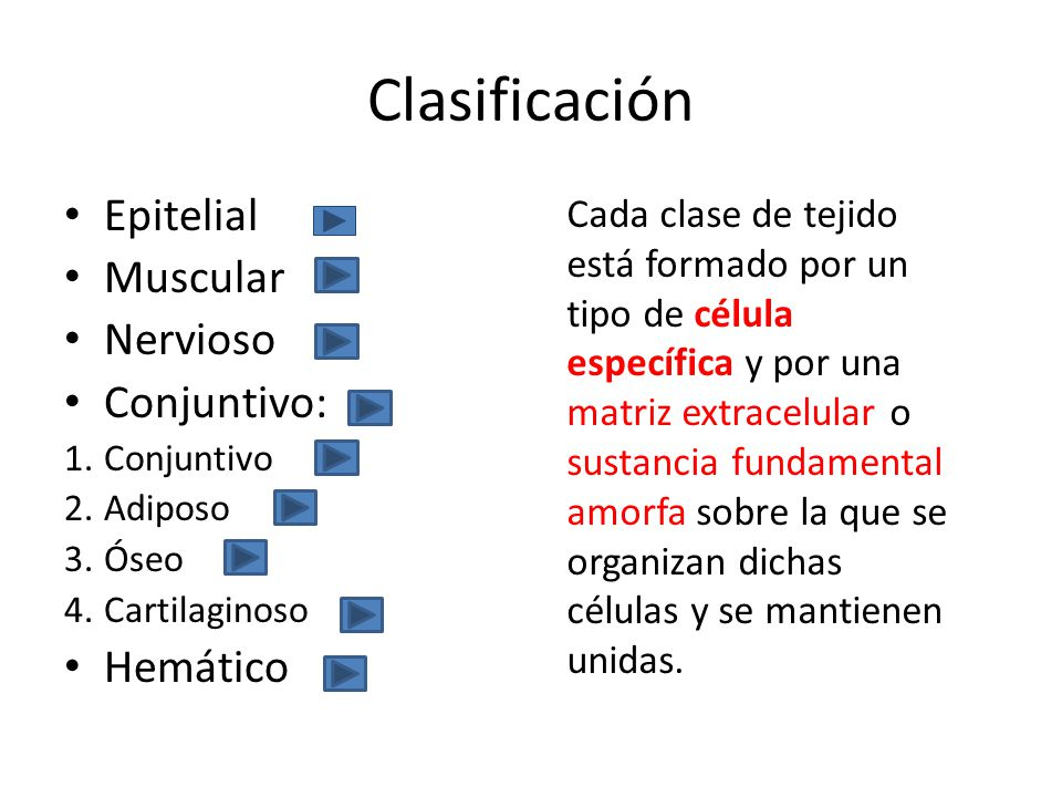 Clasificación Epitelial Muscular Nervioso Conjuntivo: 1.Conjuntivo 2.Adiposo 3.Óseo 4.Cartilaginoso Hemático Cada clase de tejido está formado por un tipo de célula específica y por una matriz extracelular o sustancia fundamental amorfa sobre la que se organizan dichas células y se mantienen unidas.