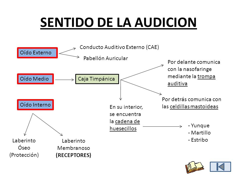 SENTIDO DE LA AUDICION Oído Externo Pabellón Auricular Conducto Auditivo Externo (CAE) Oído Medio - Yunque - Martillo - Estribo Por delante comunica c